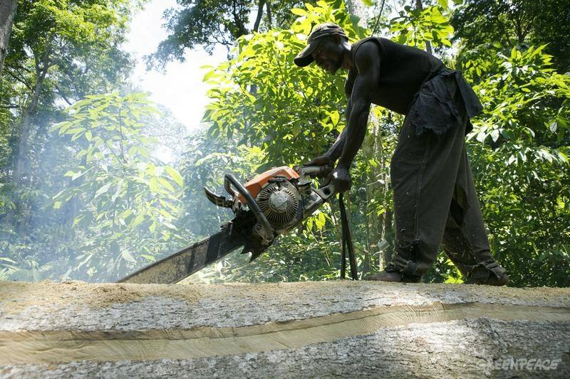 Cutting Tree - Democratic Republic of the Congo Documentation